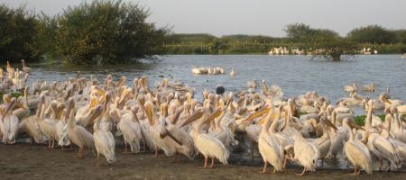 Photo of Rift Valley Lakes - 3 Day Tour in Ethiopia